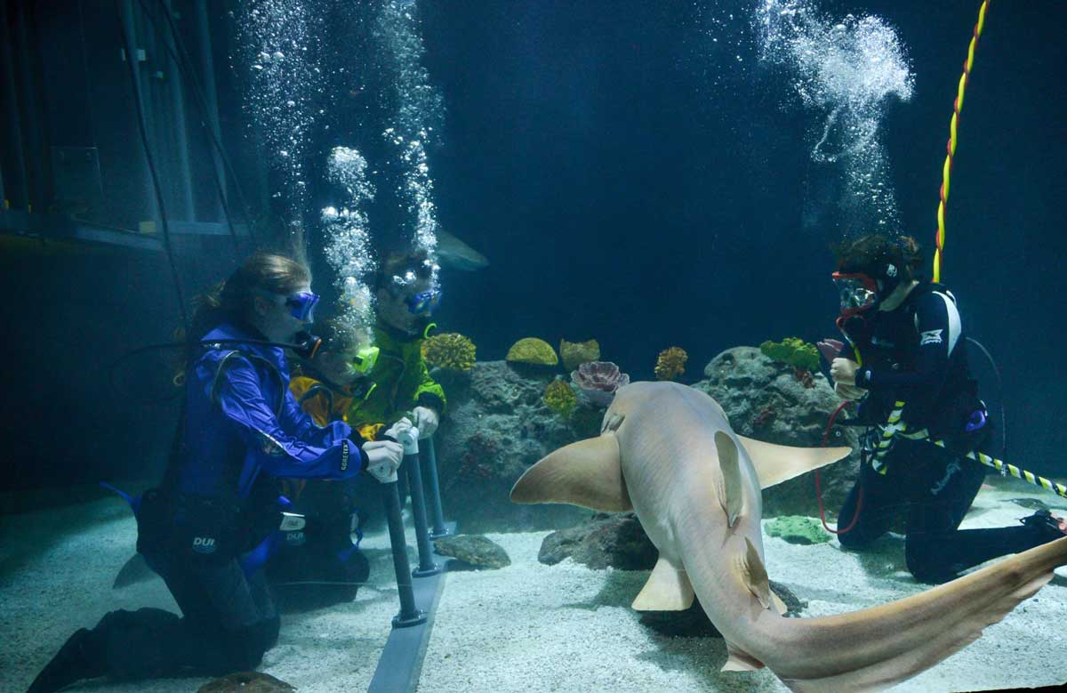 Exit133 New Dive Program Takes Non Certified Divers Beyond The Cage At Point Defiance Zoo